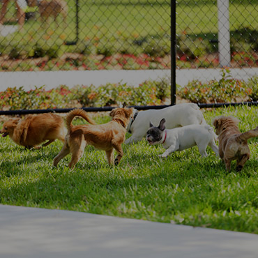 Large Dog Park at City Line Apartments